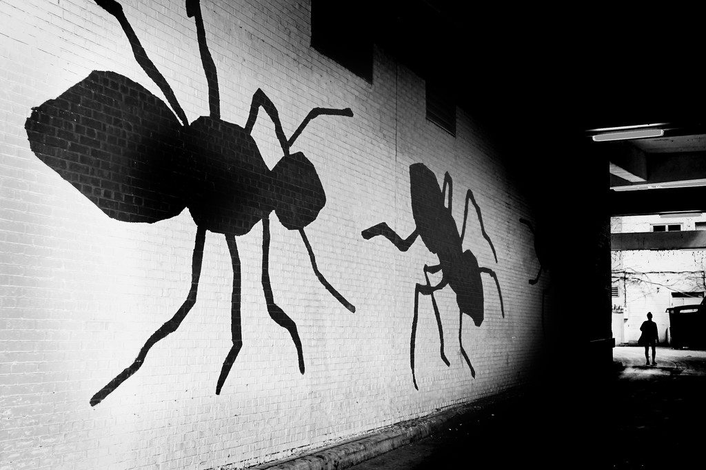 Ants in town by vera365