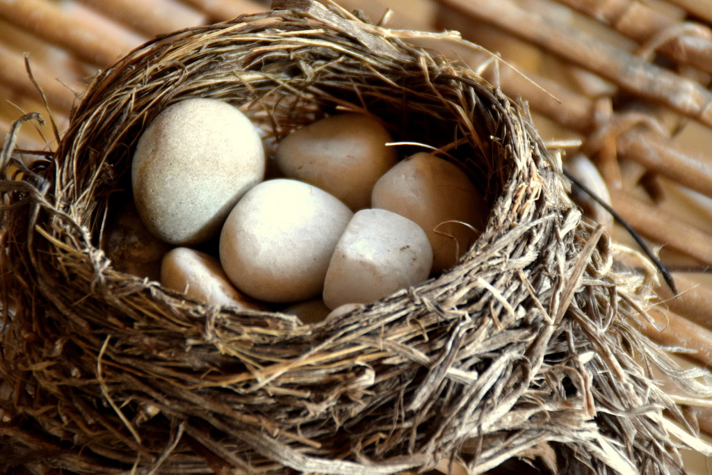 Bird nest- where are the eggs by bruni