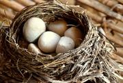 10th Sep 2016 - Bird nest- where are the eggs
