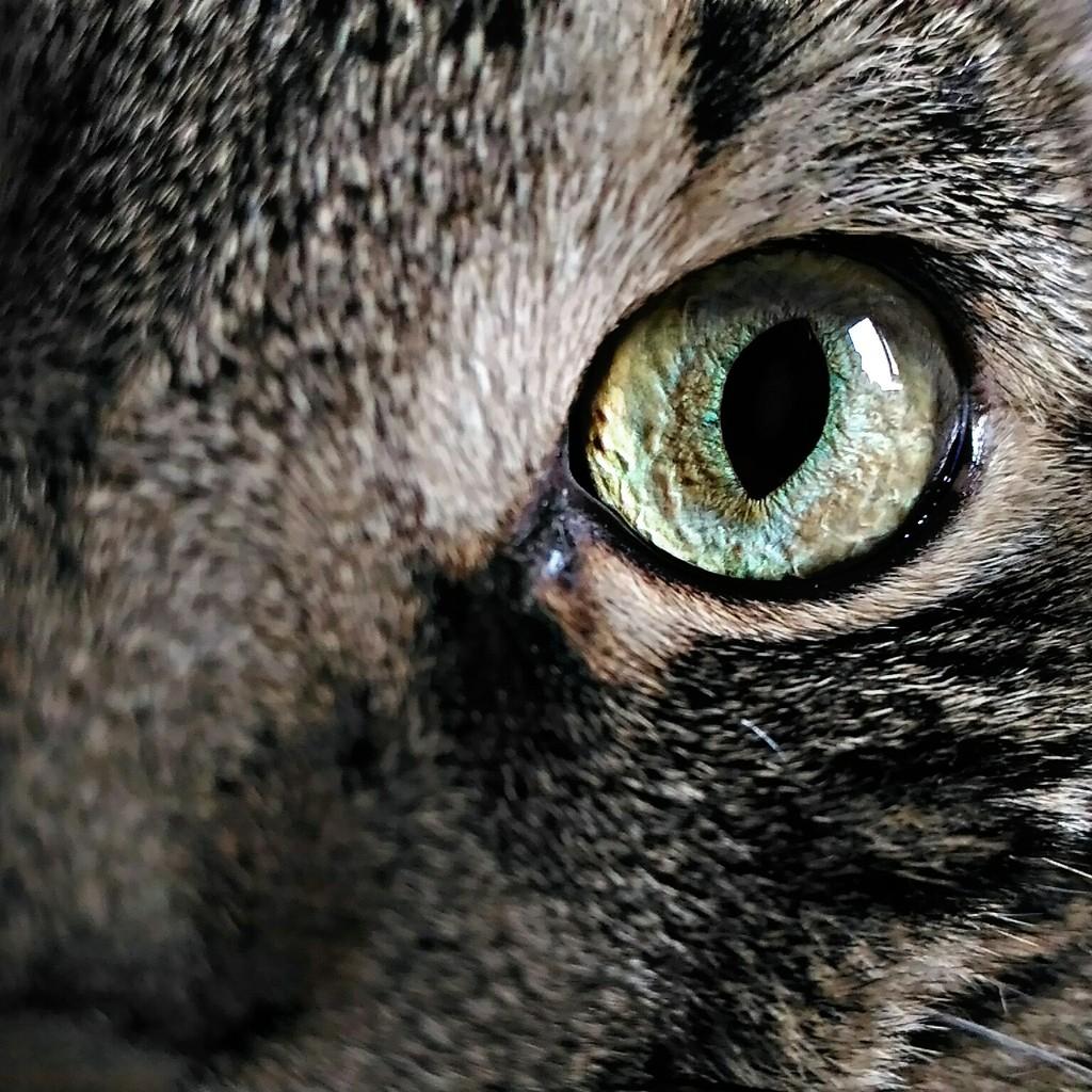 Kiki's eye... by frappa77