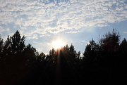 9th Sep 2016 - Sun over the pines!
