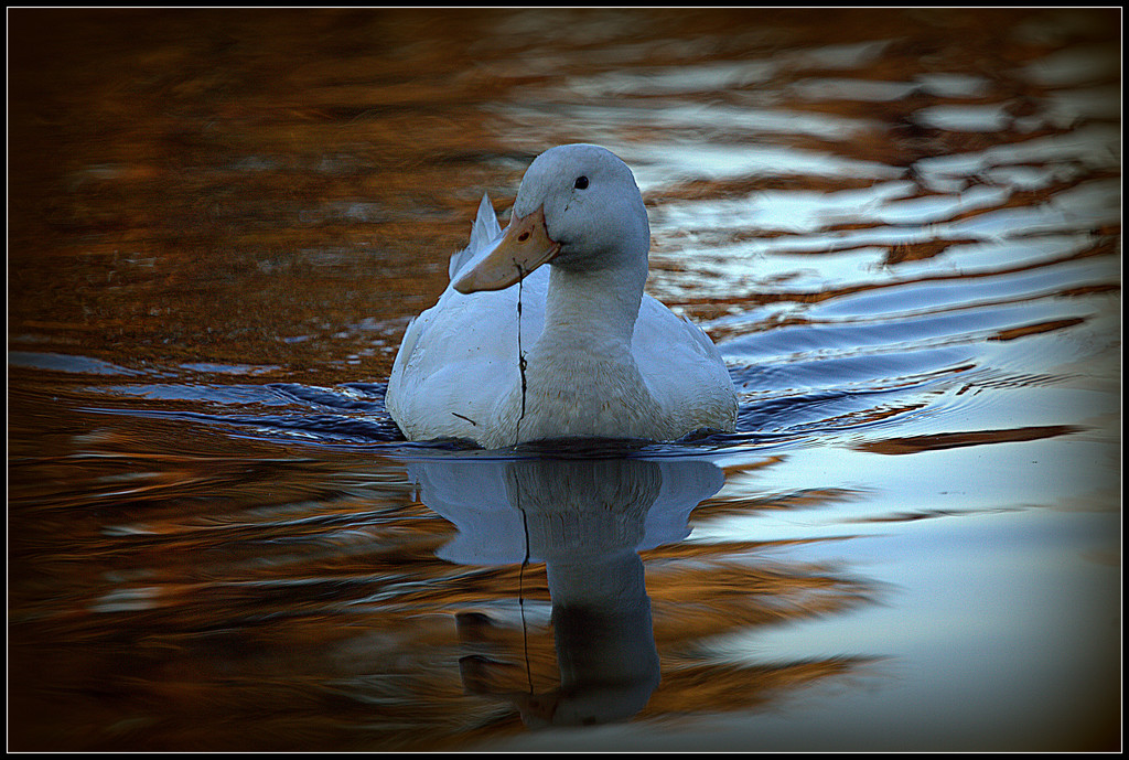 On Golden Pond by dide