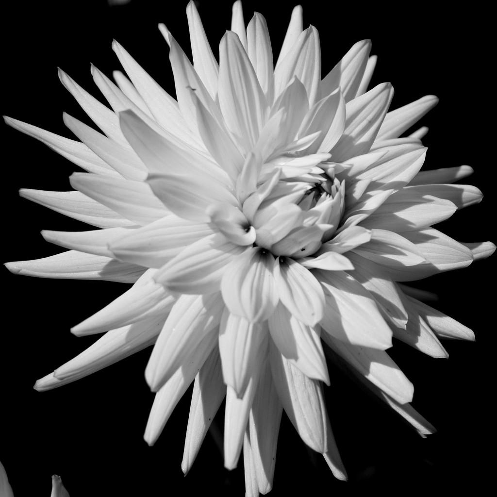 black and white by quietpurplehaze