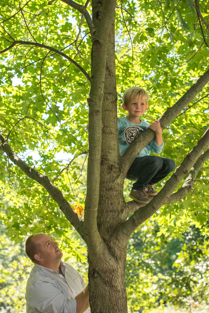 Tree climbing by dridsdale