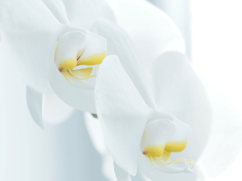 Orchids in full bloom. by janemartin