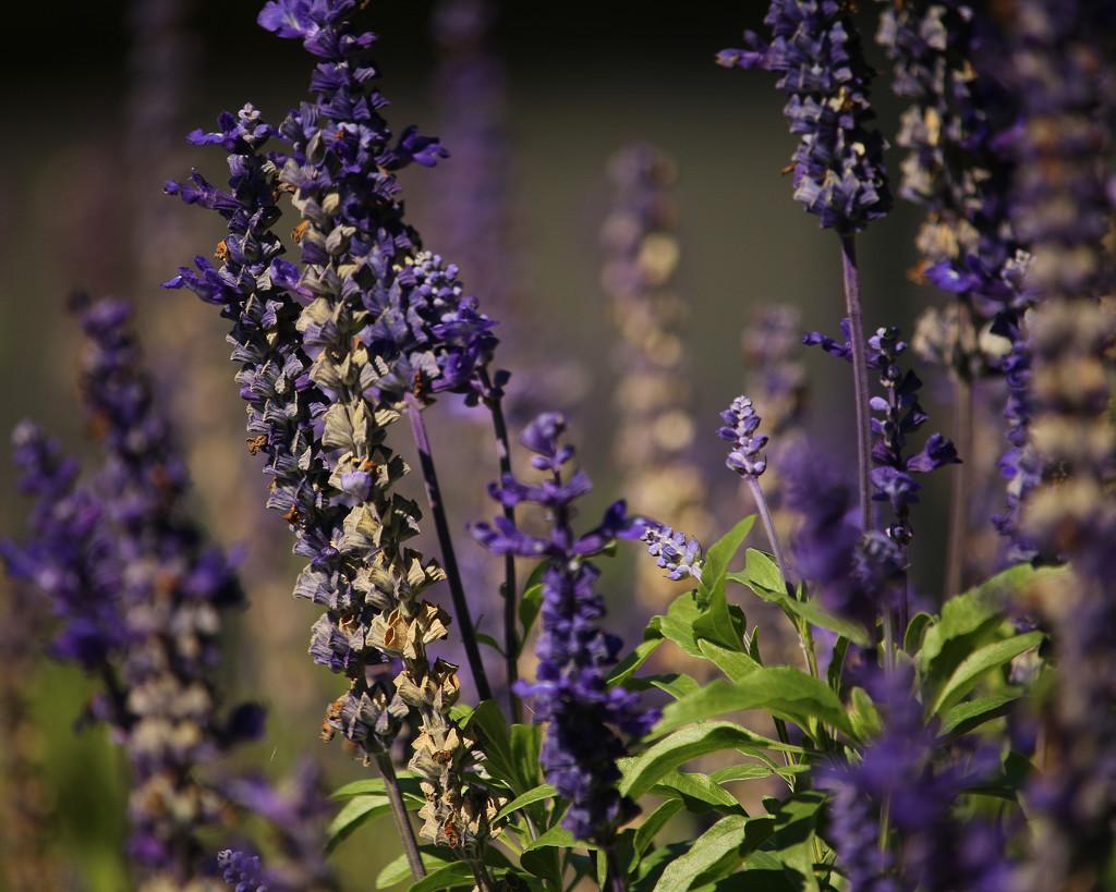 Purple by nanderson