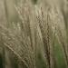 Softness by dridsdale