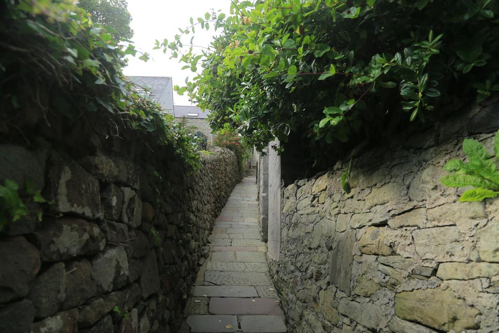 Pirate Lane by lifeat60degrees