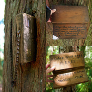14th Sep 2016 - Wooden Books in the Wacky Woods