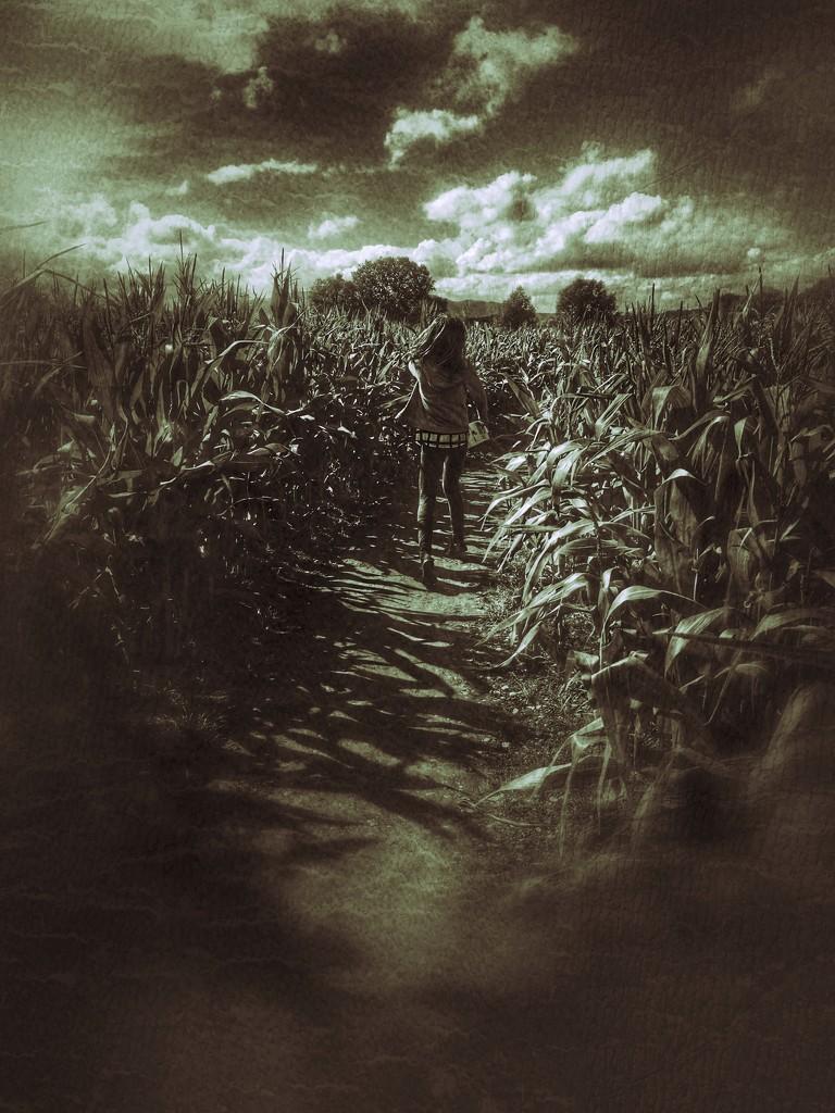 Maize maze by rachelwithey