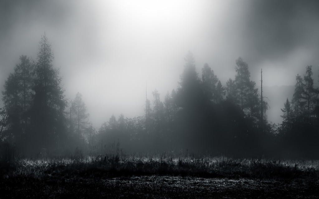 the morning mist by northy