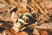 15th Sep 2016 - (Day 215) - Wild Sandile Appears