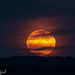 Harvest Moon, September 16, 2016 by radiogirl
