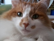 2016-09-17 - Ginger spare