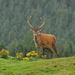 MONARCH OF THE GLEN by markp