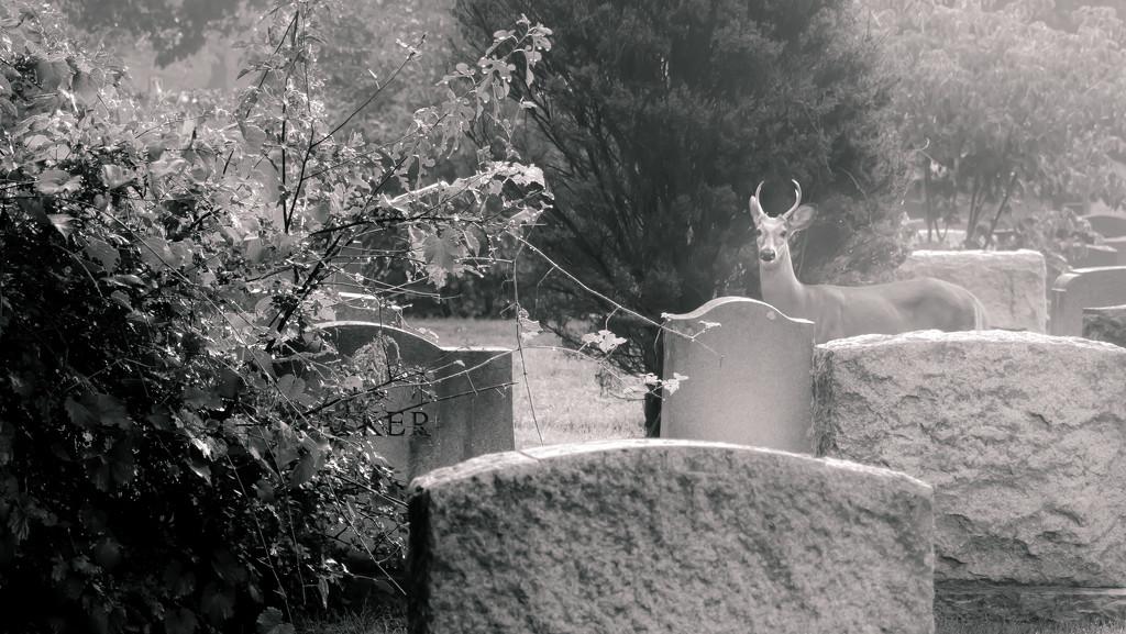 oh deer... by northy