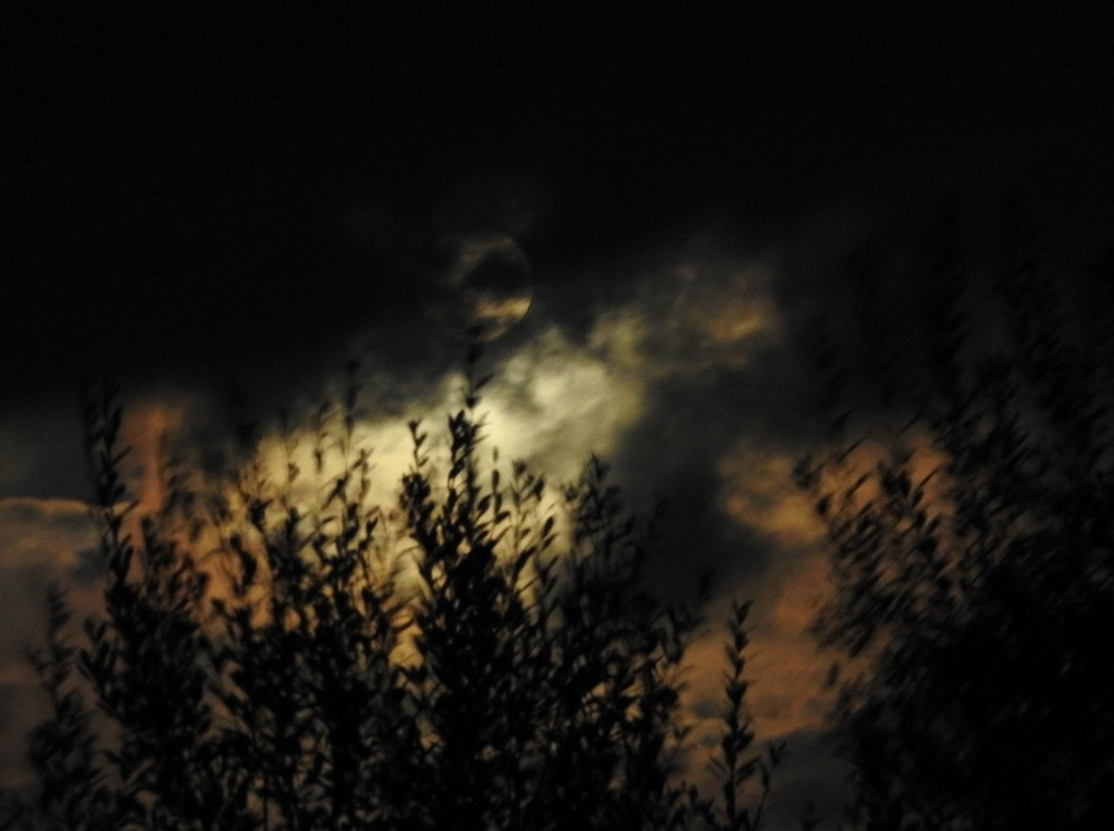 Moonlit windy evening by roachling