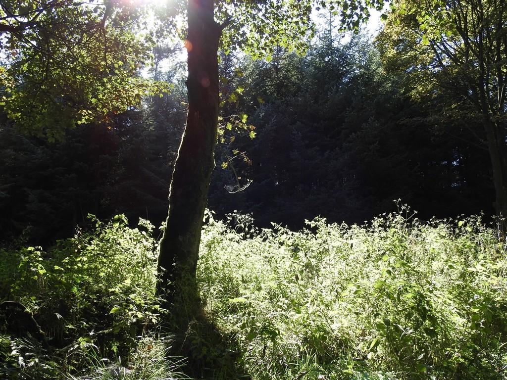 September Sunshine by roachling