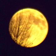 18th Sep 2016 - Yellow moon