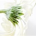 swirl by pistache