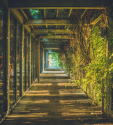 18th Sep 2016 - Covered Walkway