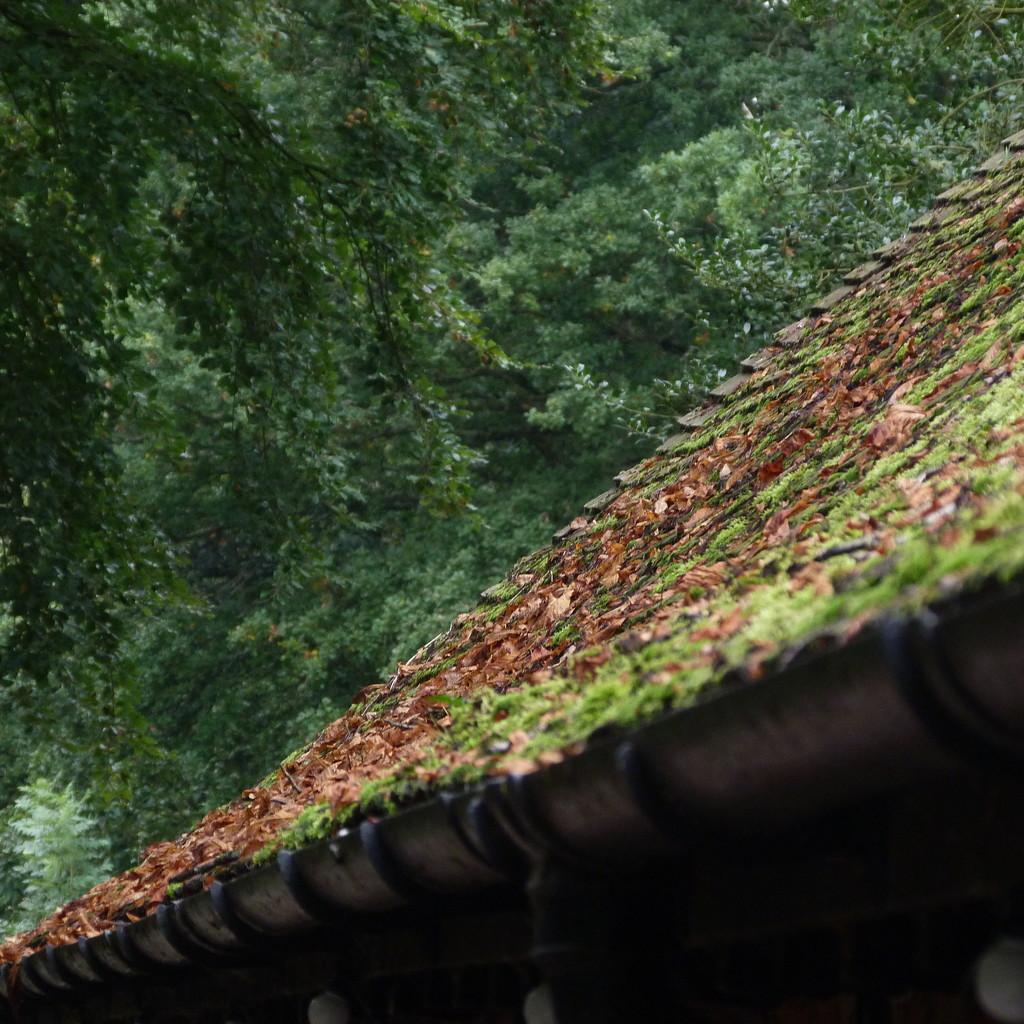 Leaves have Fallen by 30pics4jackiesdiamond