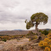 Lone Tree by lynne5477