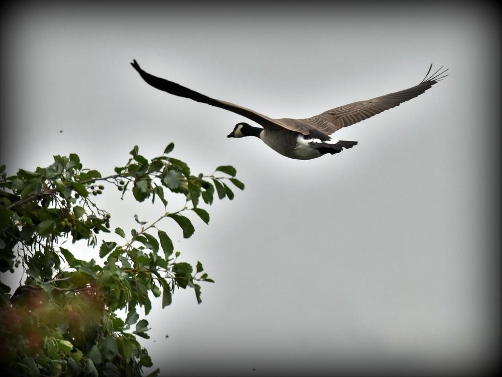 Flying high by rosiekind