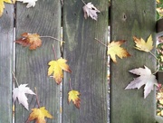 22nd Sep 2016 - First day of Autumn