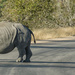 World Rhino Day by salza