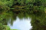 22nd Sep 2016 - Little pond, big reflection