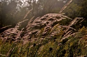 21st Sep 2016 - blowing in the wind