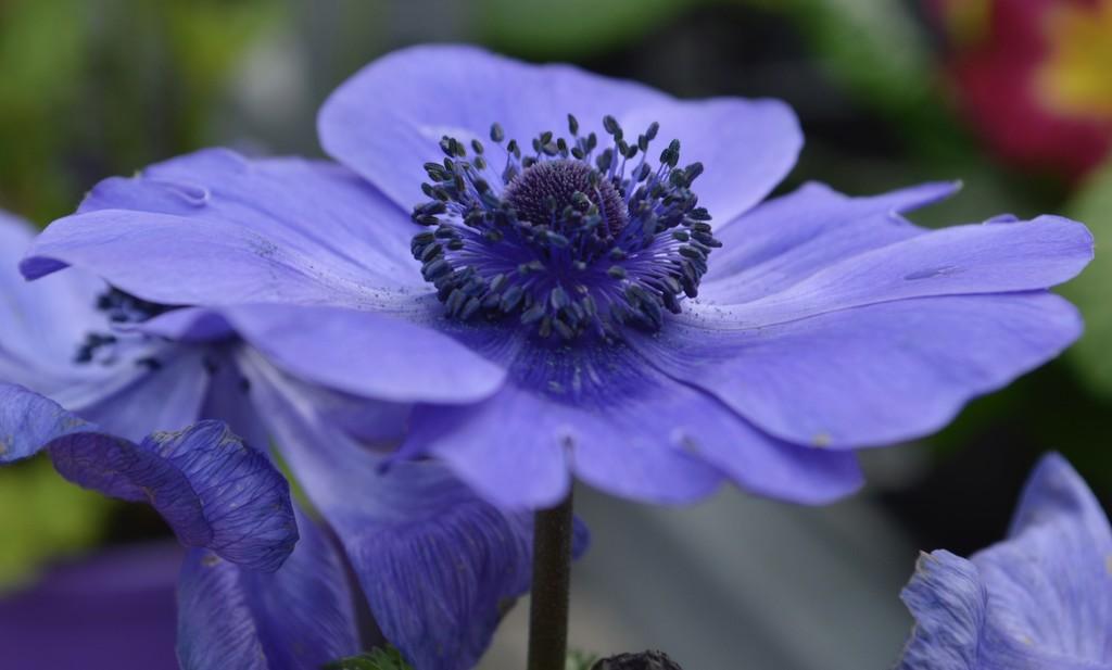Beautiful in Blue by alinz
