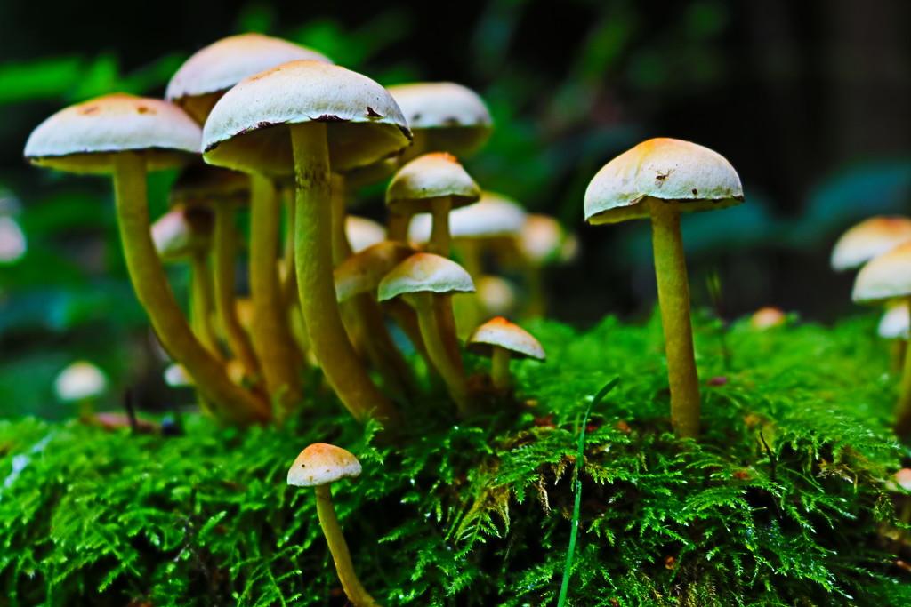 Burst of Fungi by phil_sandford