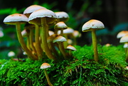 23rd Sep 2016 - Burst of Fungi