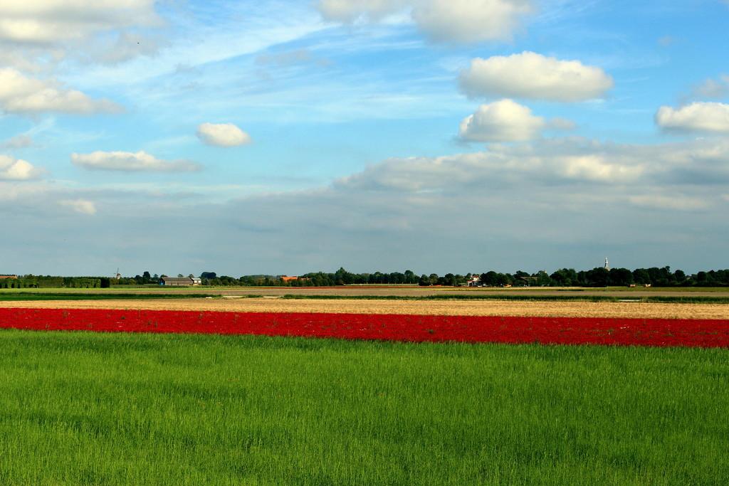 Landscape art without an artist. by pyrrhula