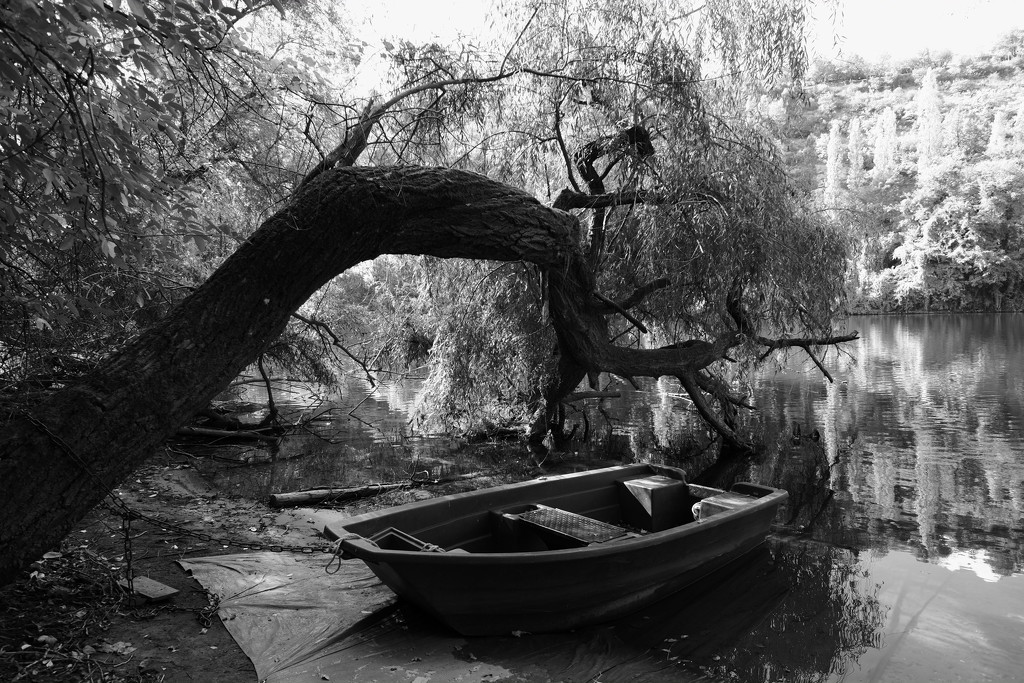 Project 52: Week 39 - Rowboat and Tree by vignouse