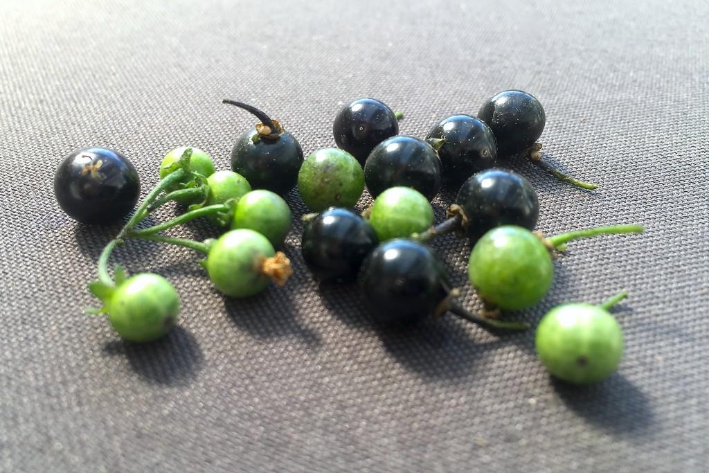 Berries by kjarn