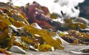 24th Sep 2016 - Seaweed