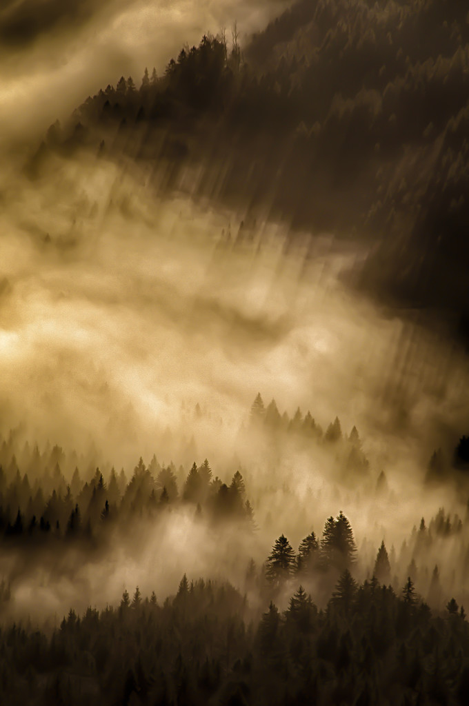 light-flooded morning mist by jerome