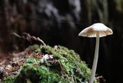 25th Sep 2016 - Delicate Fungi