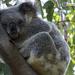 sleeping tight by koalagardens