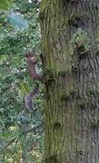 25th Sep 2016 - Squirrel