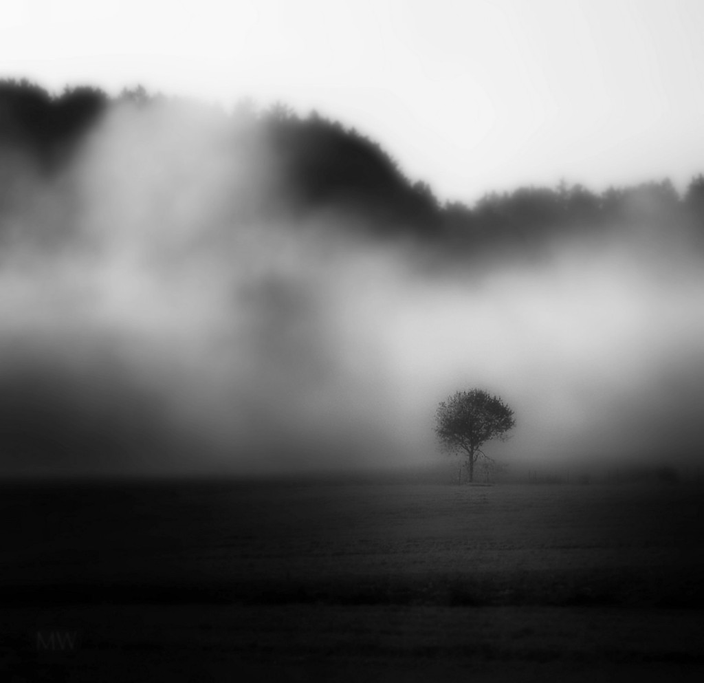 2016-09-25 in autumnal fog by mona65