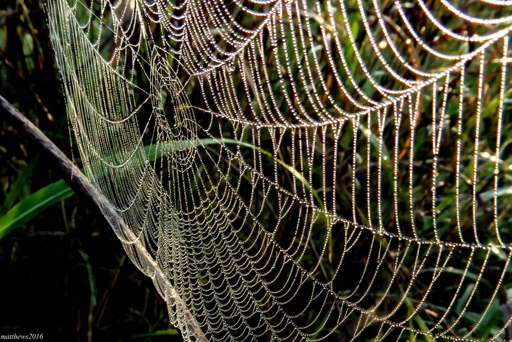 Biggest Web I've Caught by milaniet