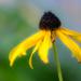 Fall flowers by novab