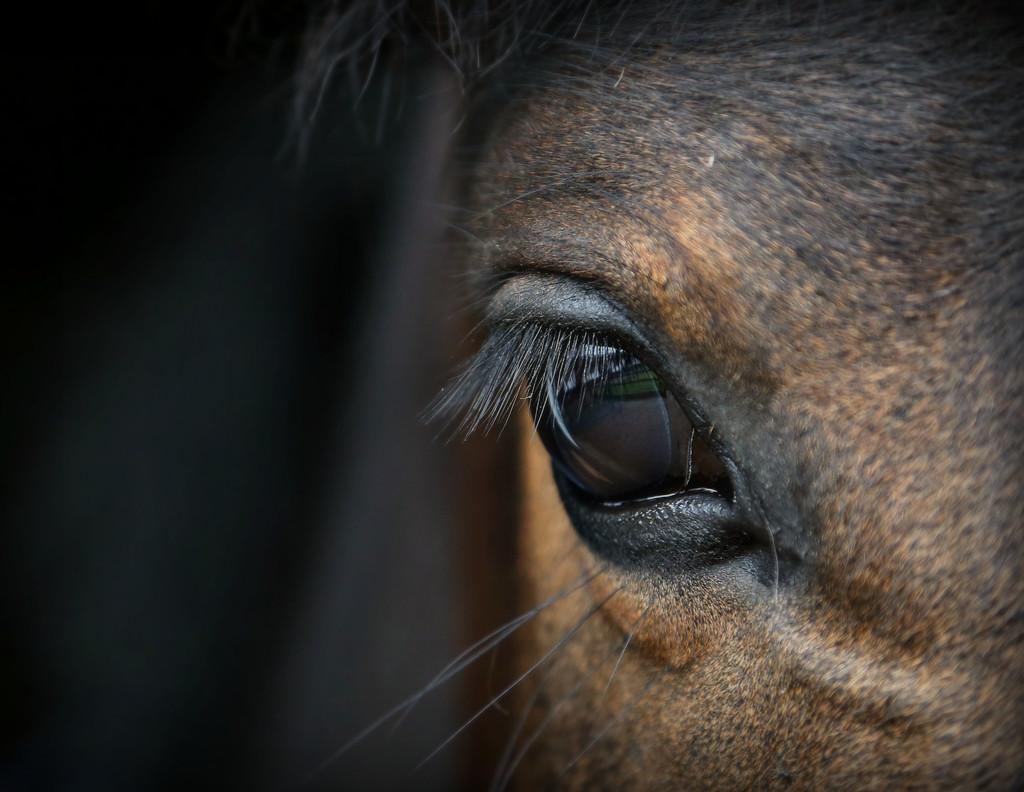 Whisper's Eye by jesperani