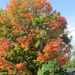 First one with beautiful fall colors by bruni