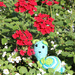 Oh no, a snail among the flowers! by stiggle