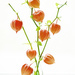 Orange lanterns! by fayefaye